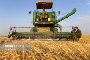 نرخ خرید تضمینی «گندم» پایین است