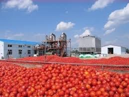 رب گوجهفرنگی ۲۰۰۰ تومان دیگر ارزان شد