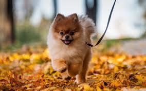 شخصیت سگها هم مانند انسانها تغییر میکند