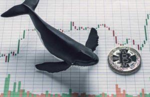نهنگهای بیت کوین طی اصلاح اخیر ۱۲۲ هزار واحد BTC به دارایی خود افزودهاند